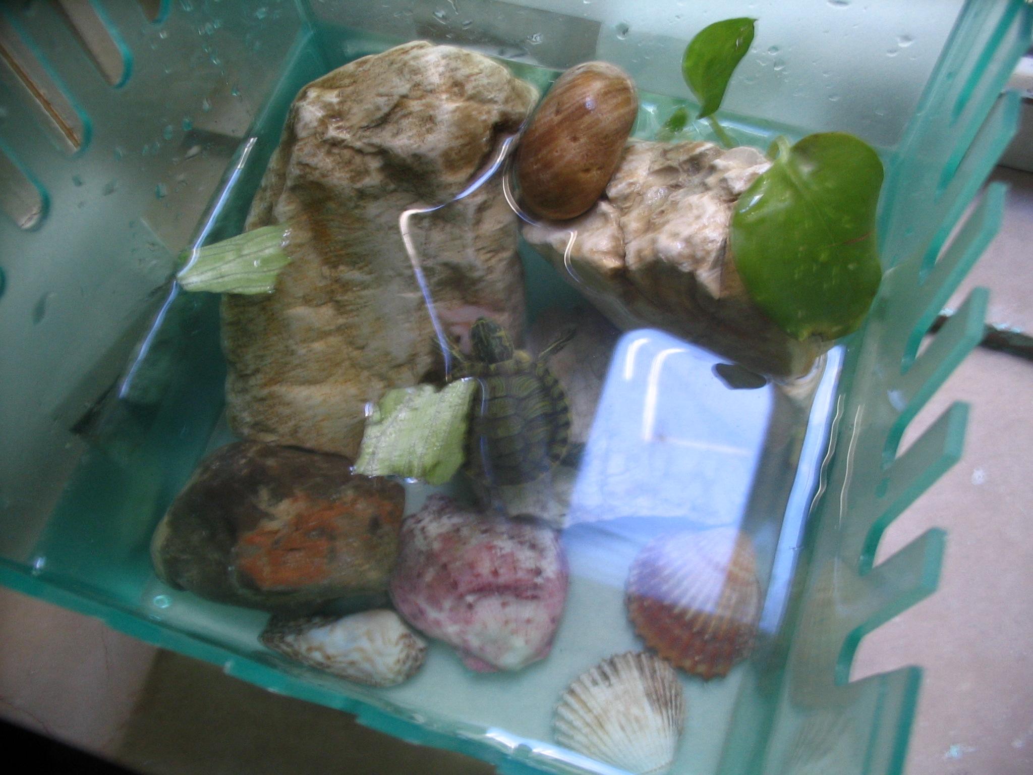 Tartaruga spaventata sanguefreddo net for Contenitore per tartarughe